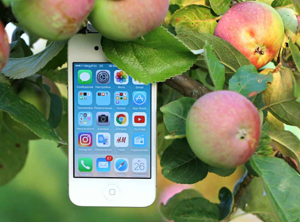 phone-iphone-apple-apple-tree-163115.jpeg